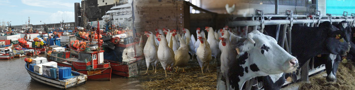 In the first half of 2019, egg production, slaughtered livestock and landed catch registered a year-on-year growth while poultry meat decreased (Read more...)
