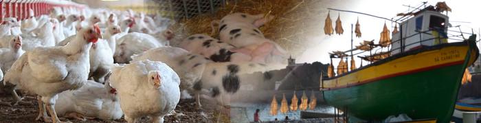 Em 2016, a captura de pescado e o abate de gado aumentaram, enquanto o abate de frango e a produção de ovos diminuíram face ao ano anterior (Ler mais...)