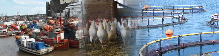 No 1.º trimestre de 2021, o abate de gado e de frango e a pesca descarregada decresceram relativamente ao período homólogo enquanto a produção de ovos registou um aumento (Ler mais...)